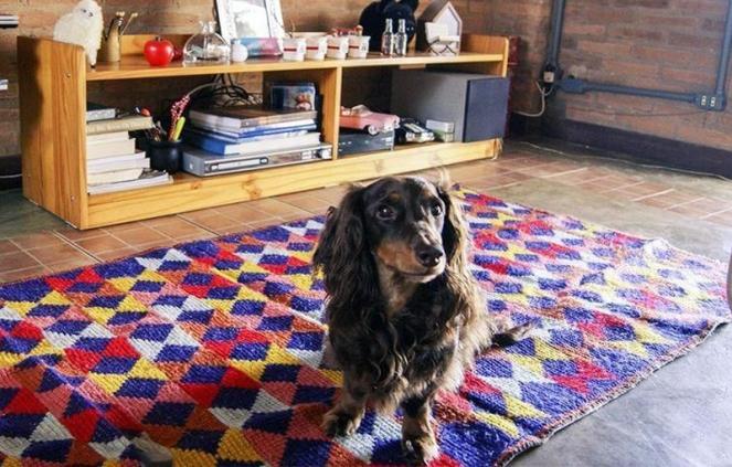 cachorro-tapete